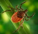 В Тульской области выявлен первый случай заболевания клещевым борреллиозом