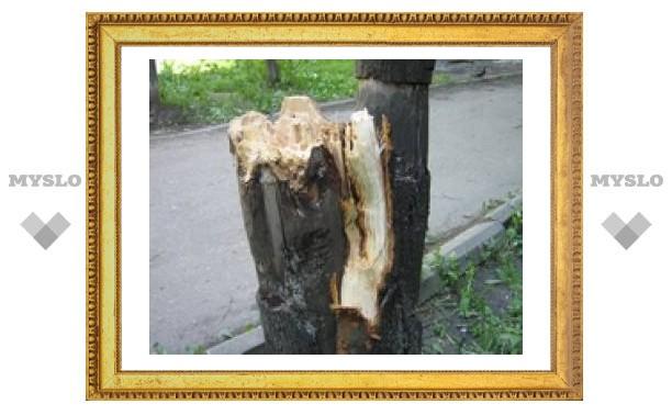 Туляков продолжают атаковать деревья