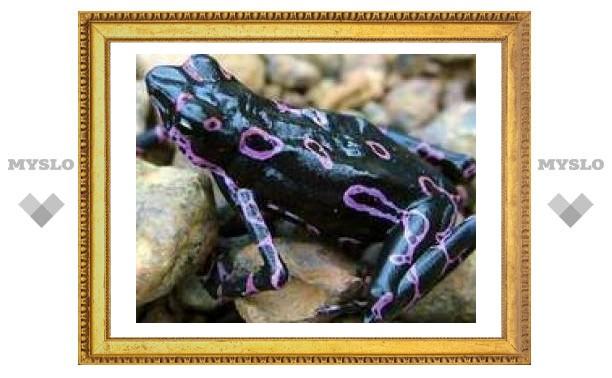 В Южной Америке нашли новую светящуюся лягушку