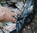 Власти Тулы: по факту обнаружения медицинских отходов на берегу Бежки начата проверка