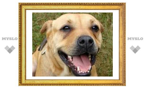Тульский хирург вернул собаку с того света
