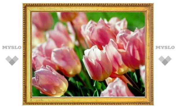 Ко Дню Победы в Туле будет высажено 100 тысяч цветов