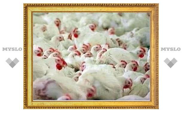 """Банкротство птицефабрики """"Рассвет"""" может быть преднамеренным"""