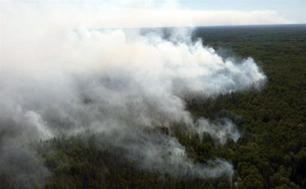 Леса в Алексинском районе осмотрят с вертолета