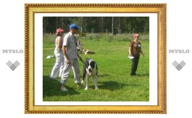 Туляки показали своих лучших собак