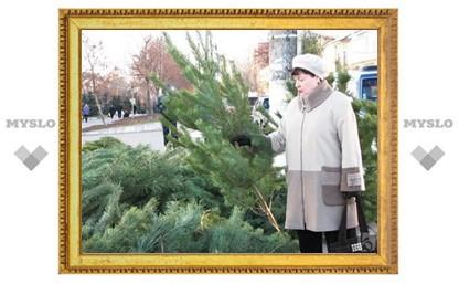 Где в Туле можно купить елку