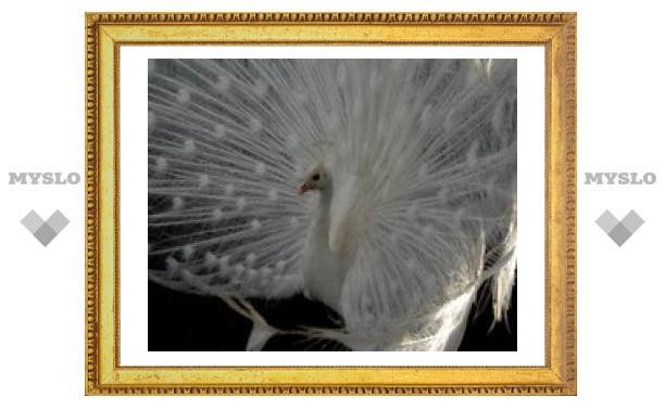 В тульском парке поселились белые павлины и попугаи