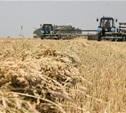 В Тульской области открылось производство по глубокой переработке пшеницы