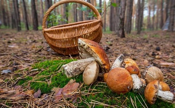 В Тульской области погиб грибник