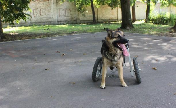 Собаке-инвалиду из Новомосковска вернули коляску