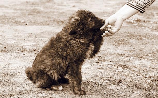 Почему приюта для собак в Туле не будет?
