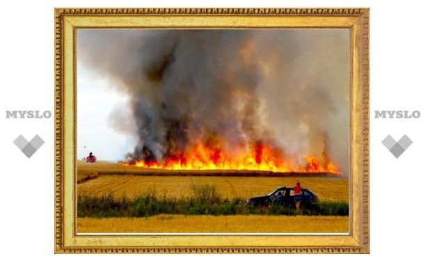 Под Тулой сгорело целое поле пшеницы