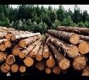 Чернские чиновники незаконно вырубили деревьев на 26 миллионов рублей