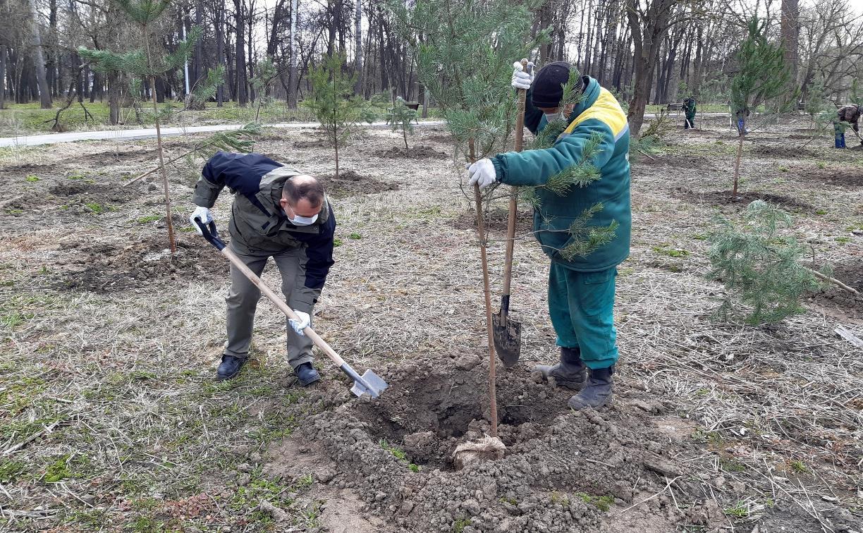В Зареченском районе Тулы появился «Сад памяти»