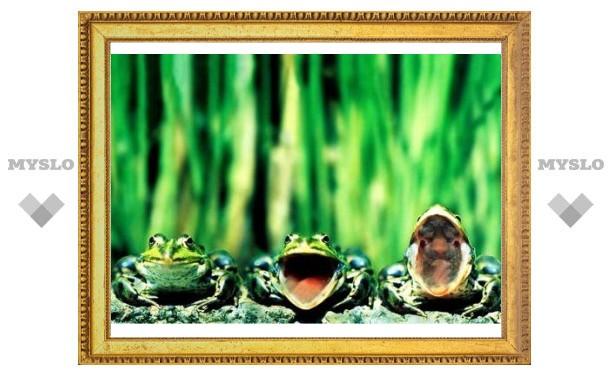 Тульские семьи превратятся в лягушек