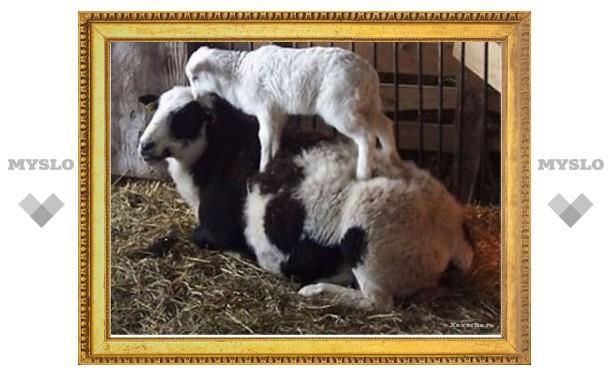 Под Тулой украли козу и козленка