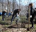 В Комсомольском парке Тулы высадили 100 берез