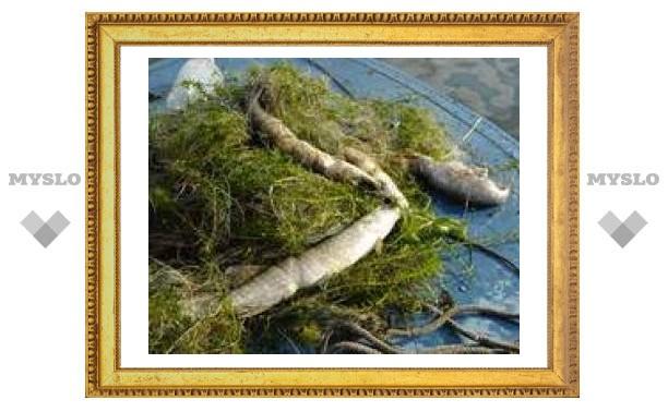 Тульский Рыбнадзор повязал москвича за браконьерство