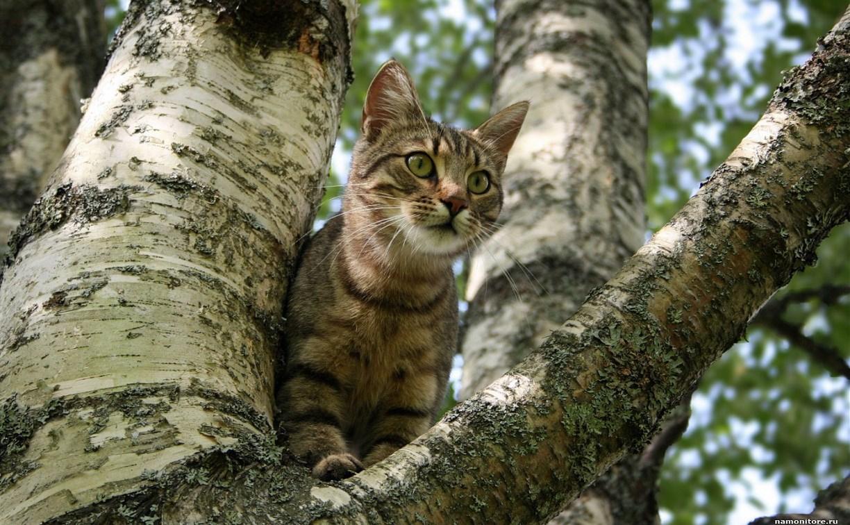 В Рогожинском парке на дереве уже неделю сидит кошка