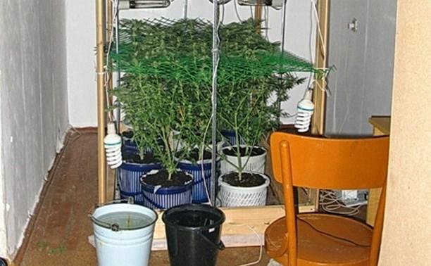 В Заокске 62-летний мужчина выращивал коноплю