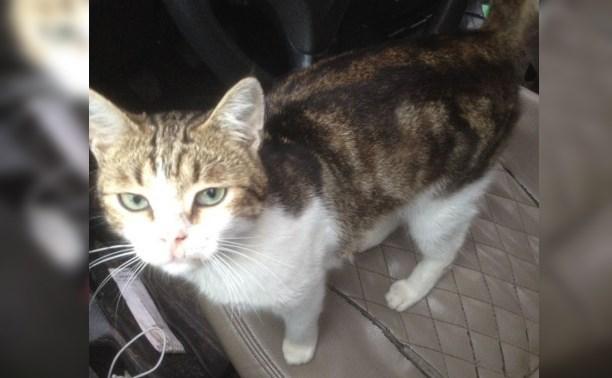 Куклачев хочет забрать себе сбежавшего от суда «кота-наркокурьера»