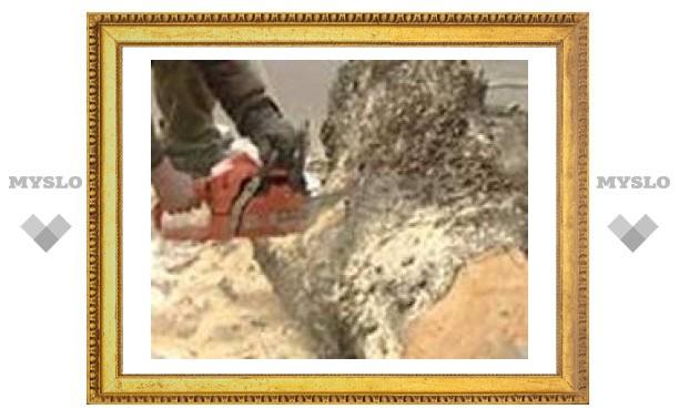 В Туле борются с опасными деревьями