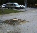 Тула без деревьев: Городу нужны специалисты-дендрологи
