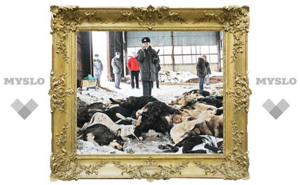 В ангаре «Спецавтохозяйства» нашли сотни собачьих трупов
