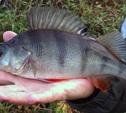 Отравление токсическими веществами - причина гибели рыбы в Упе