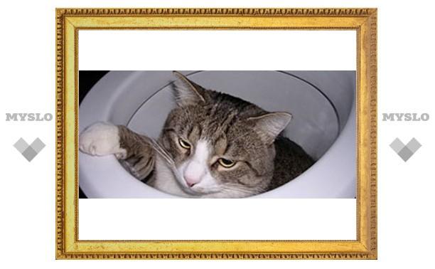 Ребенок чуть не утопил кота в унитазе