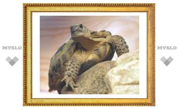В тульском Центральном парке завелись черепахи