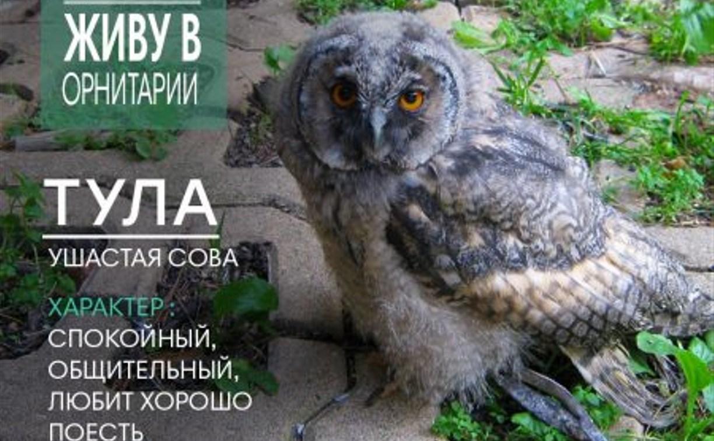 В Тульской области москвичи спасли совенка