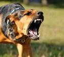 В Туле после нападения собаки скончалась пенсионерка