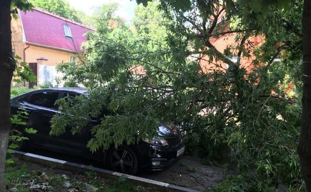 На улице Жуковского в Туле рухнувшее дерево перекрыло проезжую часть