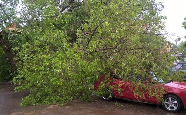 На ул. Комсомольской на автомобиль упало дерево