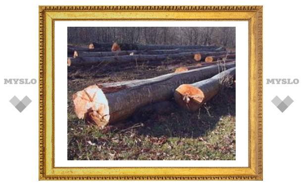 Туляков оштрафуют за вырубку деревьев