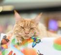 Выставка кошек в тульском «Макси»: Ломаем мимиметры!