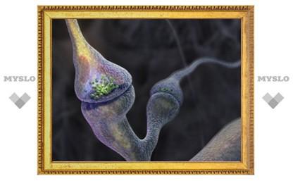 Ученые сняли формирование синапсов на видео