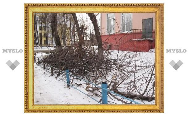 Тульские коммунальщики устроили лесоповал!