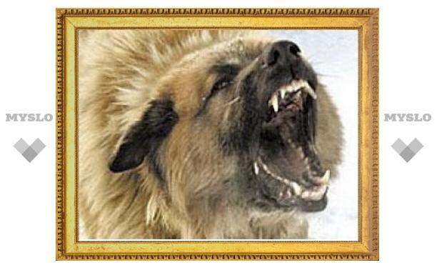 В Тульской области зафиксировано три случая заболевания животных бешенством