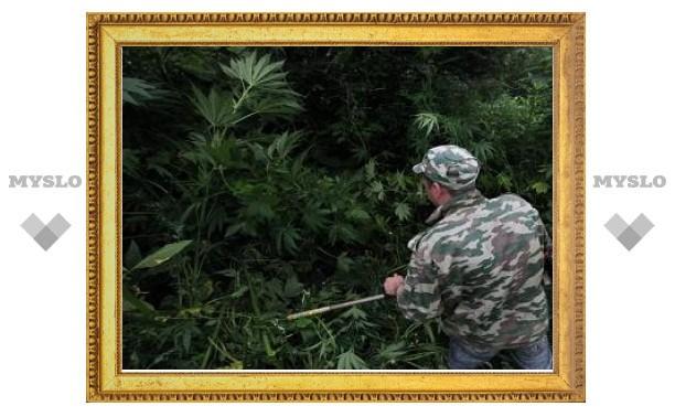 Приморская наркополиция уничтожила рекордное поле конопли