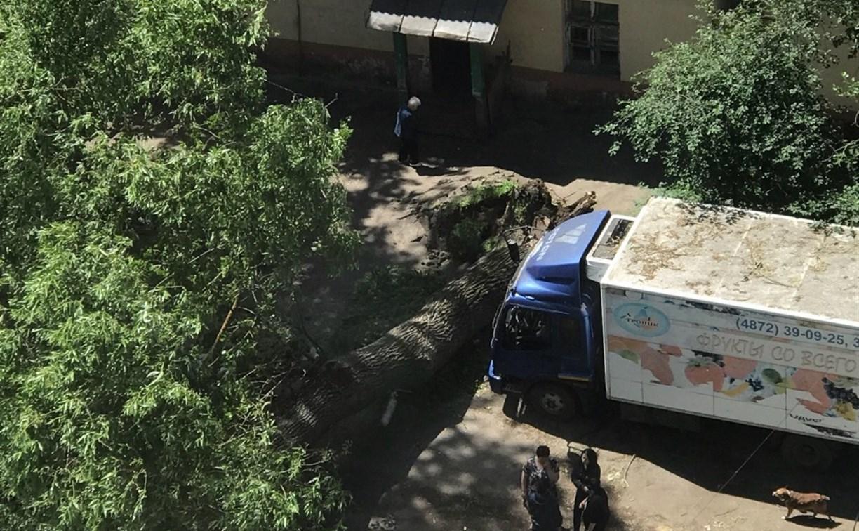 В Туле на ул. Болдина дерево упало на «Газель»