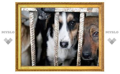 Приюту для животных требуется помощь