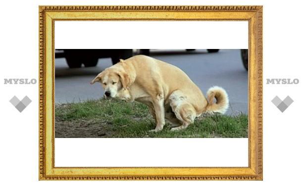 Туляков штрафуют за выгул собак