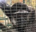 Концлагерь для животных в Туле: как выживают звери в передвижном зоопарке возле «Макси»