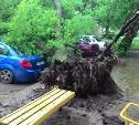 Во дворе дома по ул. Ложевой дерево придавило несколько автомобилей