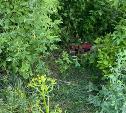 Завернутый в ковер труп женщины неделю лежал рядом с помойкой в Тульской области