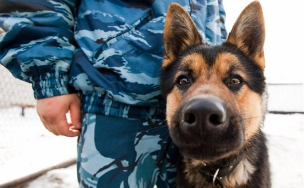 В Кимовске служебная собака помогла найти дачных воров