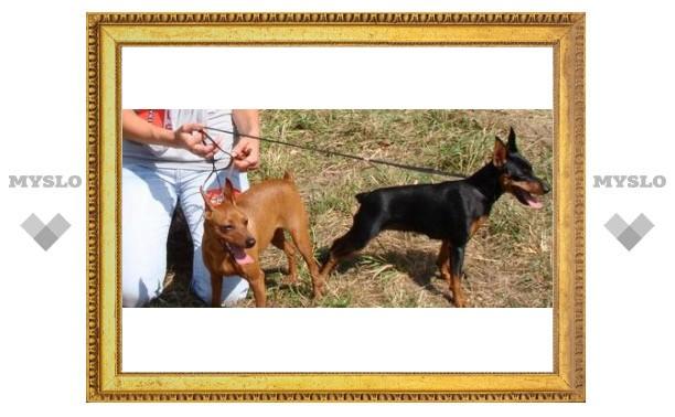 В Туле пройдут выставки собак