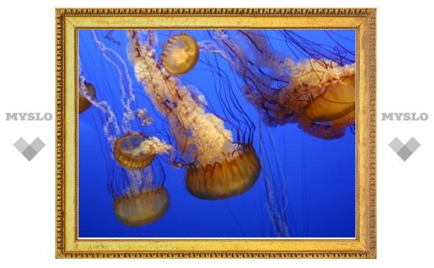 Эксперты Красного Креста посоветовали не лечить ожоги от медуз мочой